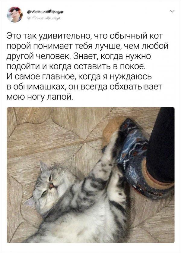 Подборка забавных твитов, которые особенно понравятся владельцам котов
