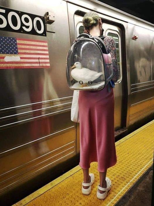 Новый тренд - рюкзаки для питомцев