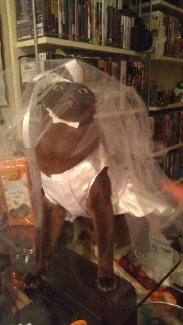 Невеста уже не та!