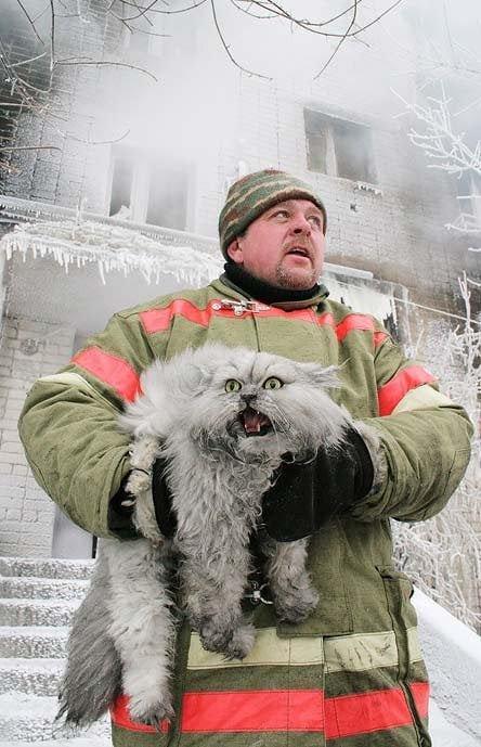 Русский пожарный спасает кота