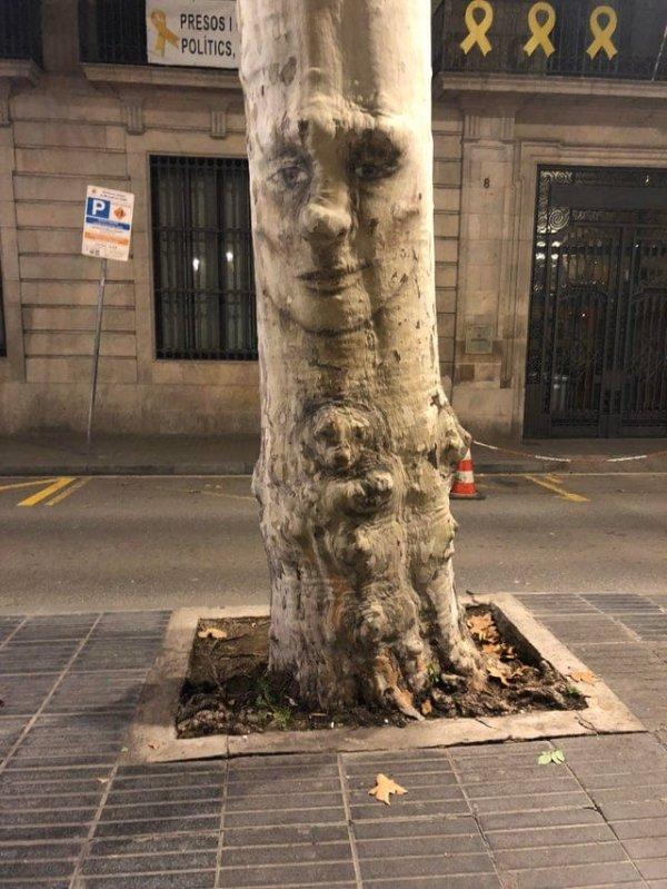 В Барселоне увидел дерево, у которого есть лицо