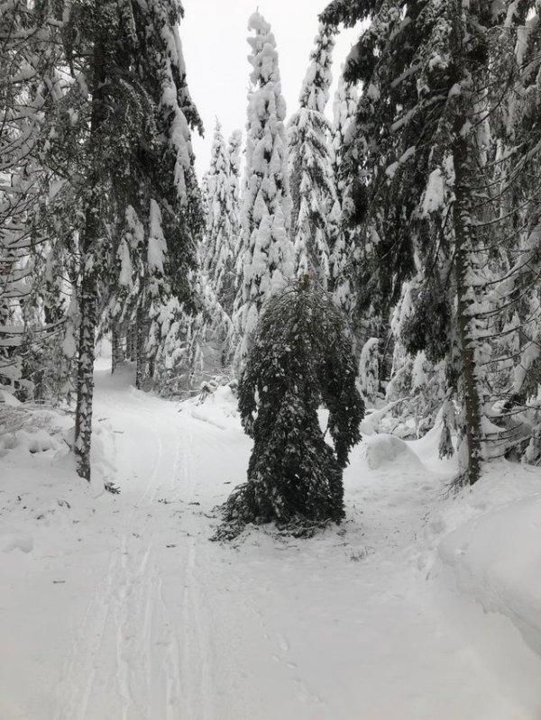 Сильно испугался, когда ехал на лыжах по лесу, а там...