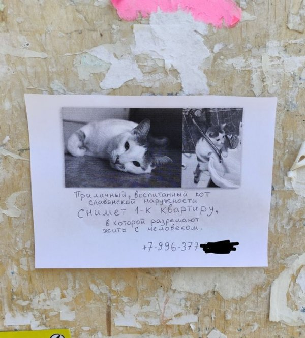 «Если что, я хотел снять квартиру, а не отдать кота»