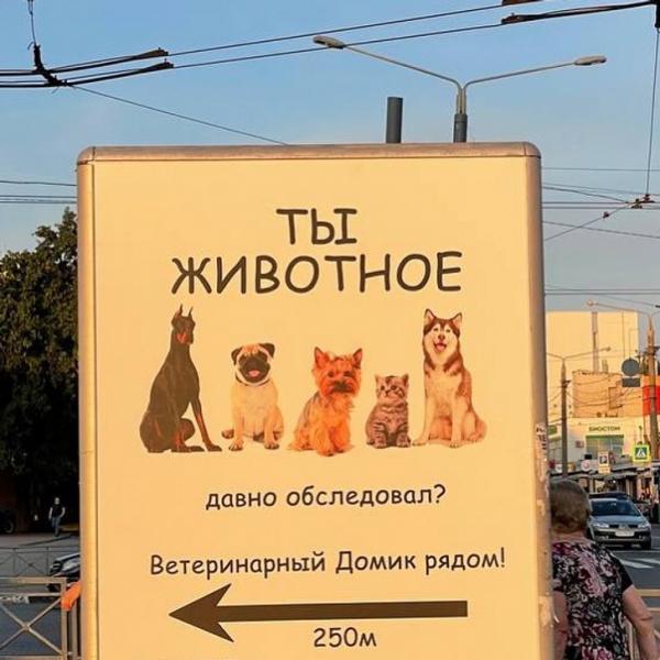 Реклама ветеринарной клиники, которая способна задеть за живое, пока не приглядишься