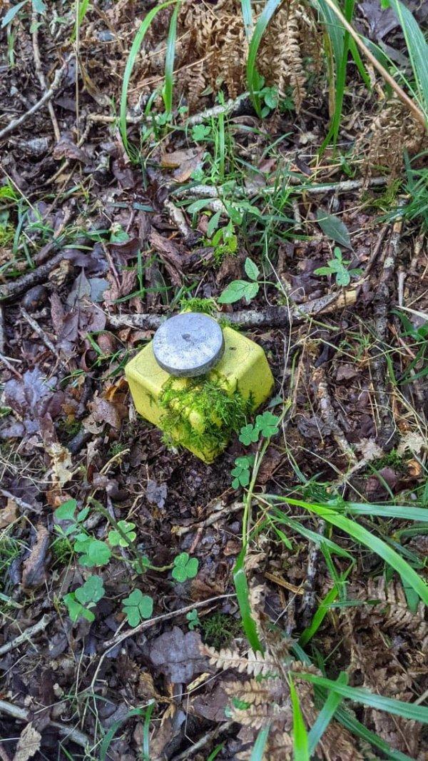Что это за кнопка в лесу? Мы не стали её выковыривать. Судя по мху, она здесь уже давно
