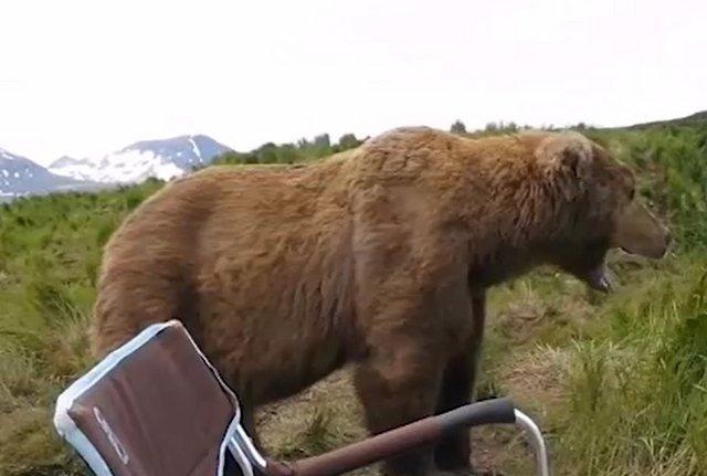 Ничего необычного, просто рыбак со стальными нервами встретил медведя