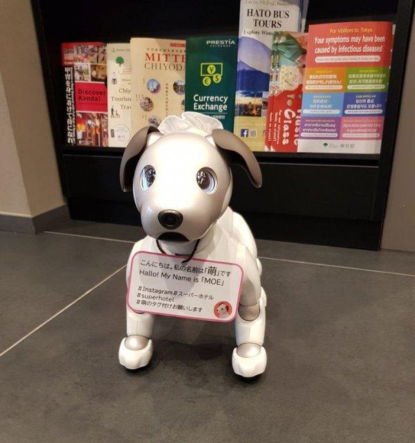 В токийских отелях можно встретить собак-роботов. Примечательно, что у каждого такого питомца свой индивидуальный характер