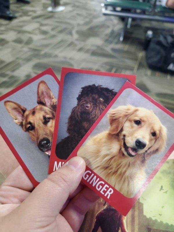 В аэропорту Рино есть собачки, с которыми можно поиграть, а потом купить карточки с их фото