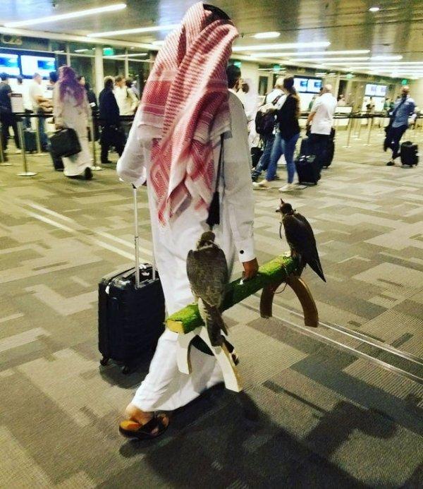 Обычный день в аэропорту Катара