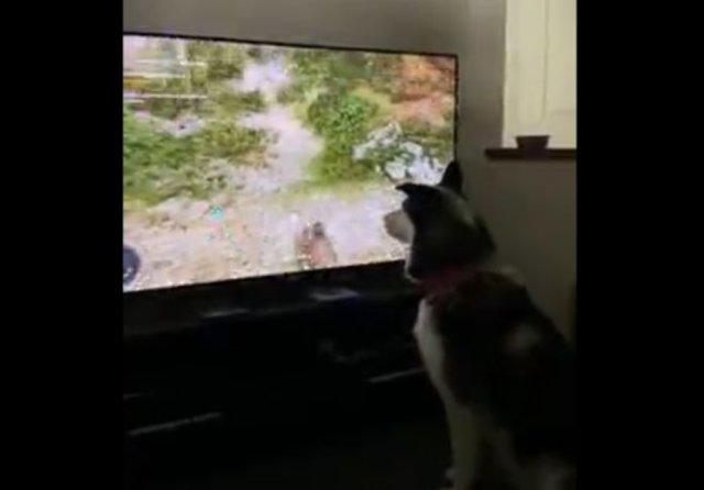 Лайфхак: как отучить собаку кусаться