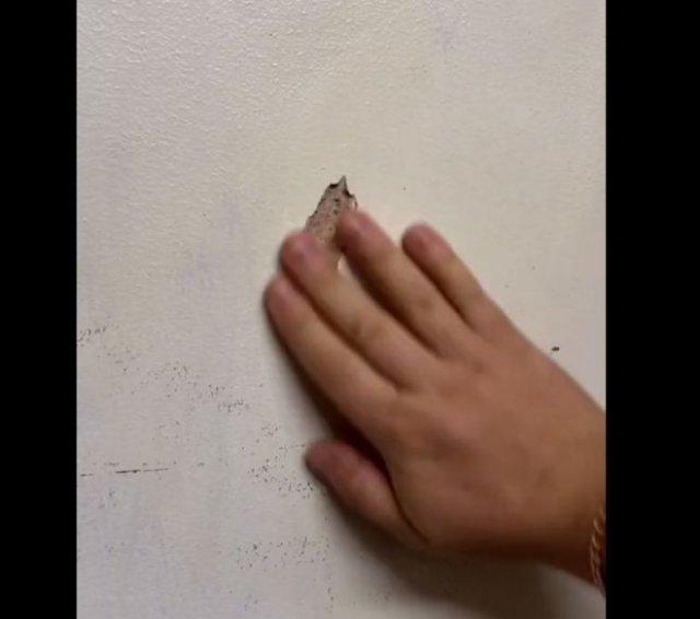 """Лайфхак: как """"заделать"""" трещину на стене"""