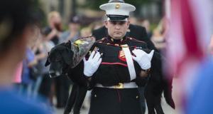 Собаку-сапера похоронили вроде настоящего героя (6 фото)