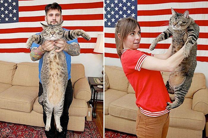 Котозавр Рекс - гигантский домашний кот (10 фото)