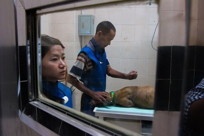 Спасительница бездомных собак из Мьянмы (20 фото)