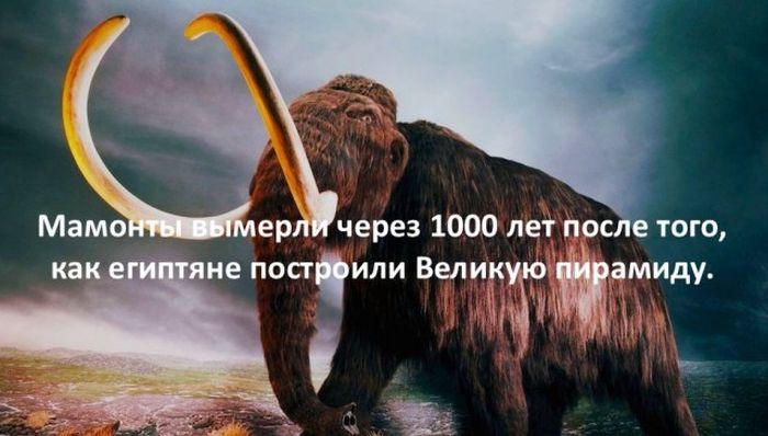 Интересные факты для любознательных (30 картинок)