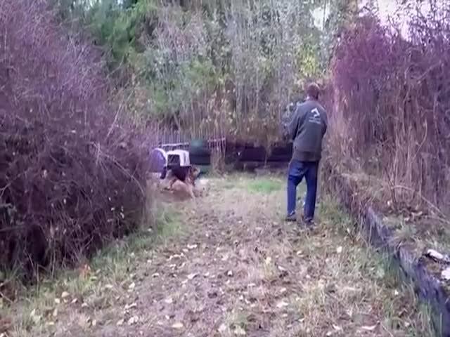Собаке, просидевшей всю жизнь не цепи, подарили свободу