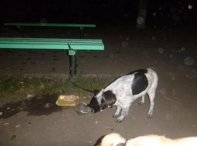 Собака с необычным письмом была привязана к скамейке в парке (3 фото)