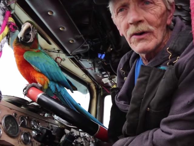 Пожилой дальнобойщик с попугаем на раритетном грузовике