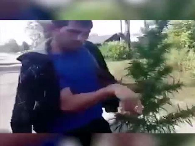 Когда случайно перепутал куст марихуаны с ёлкой