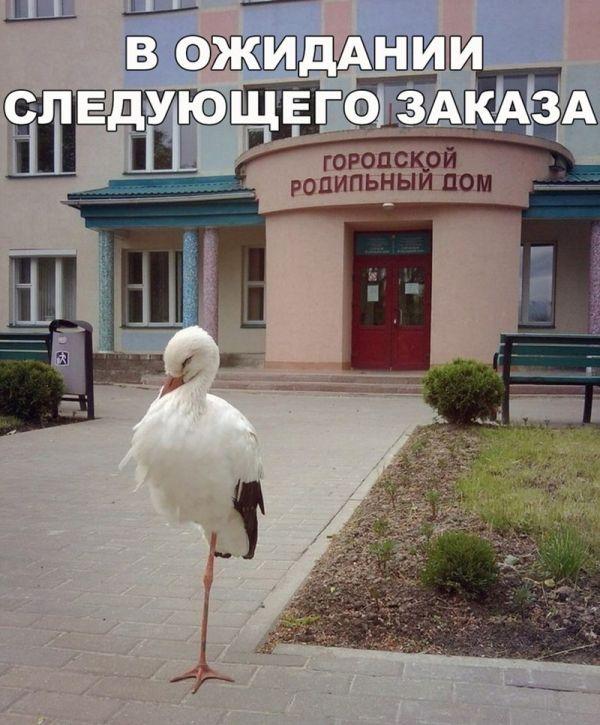 Порция смешных картинок с подписями (20 фото)