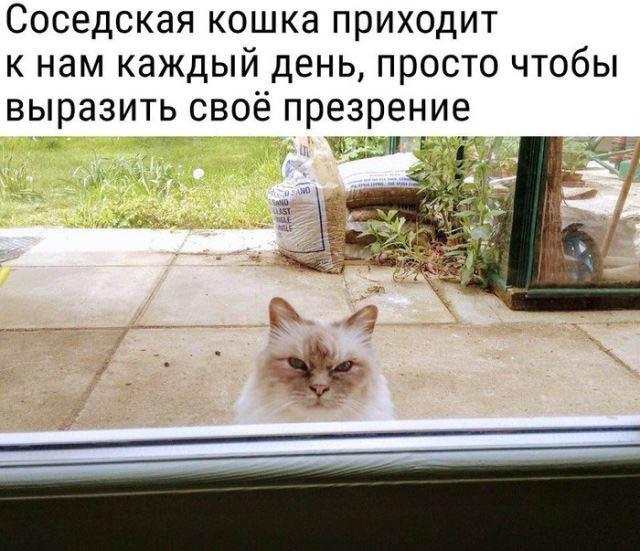 1519923985_podborka_vecher_01.jpg