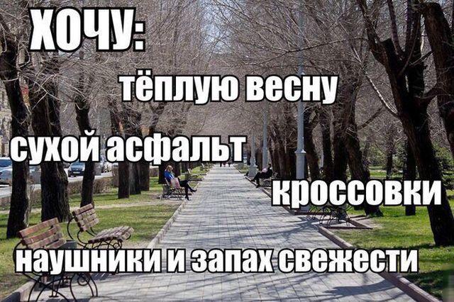 Смешные картинки с подписями (20 картинок)
