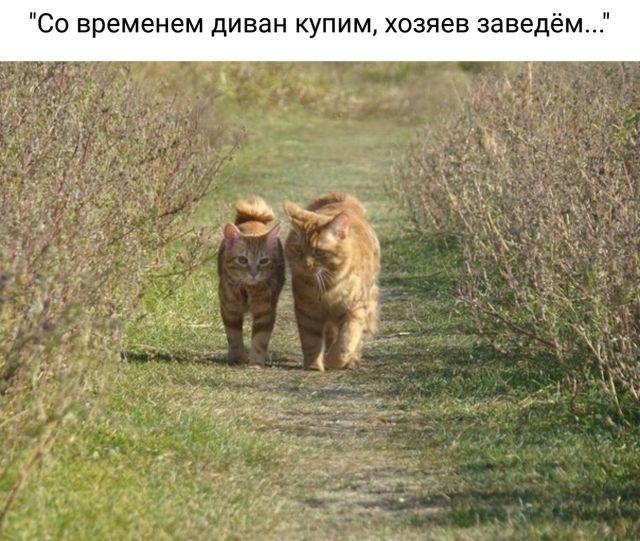 Смешные картинки с подписями (20 фото)