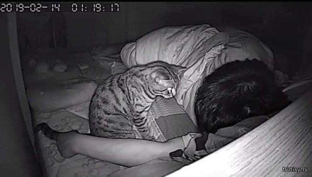А кто охраняет вас, пока вы спите? (6 фото)
