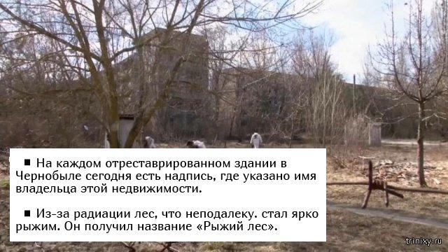 Факты о Чернобыльской катастрофе (5 фото)