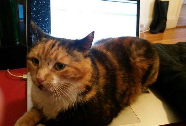 Кот-хакер помог своей хозяйке получить 100 тысяч долларов (7 фото)