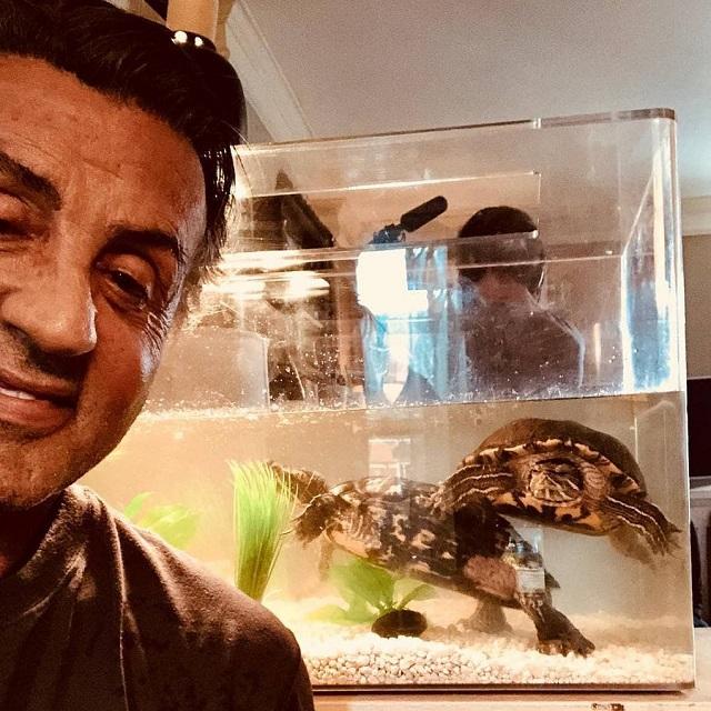 """Вместе навсегда. Сталлоне выложил селфи с черепашками, которые снимались с ним в """"Рокки 1"""" 44 года года (4 фото + видео)"""