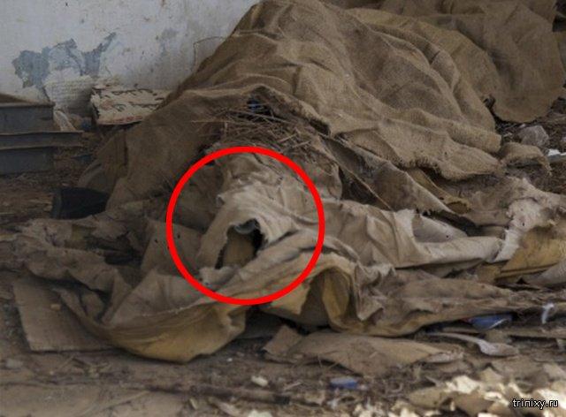 Что вы видите на этом фото? (3 фото)