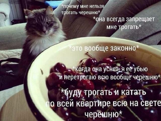 """Сети покоряет новый мем: """"Хочу черешню!"""" (19 картинок)"""