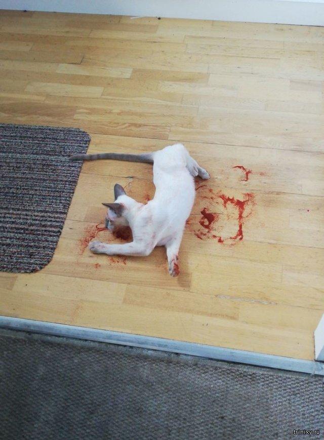 Фух, показалось. Кот напугал хозяина до полусмерти (3 фото)