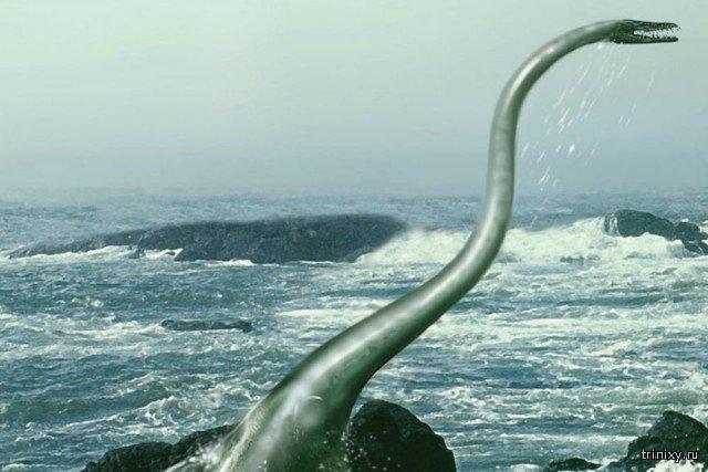 В Антарктиде обнаружили окаменелые останки крупнейшего морского создания