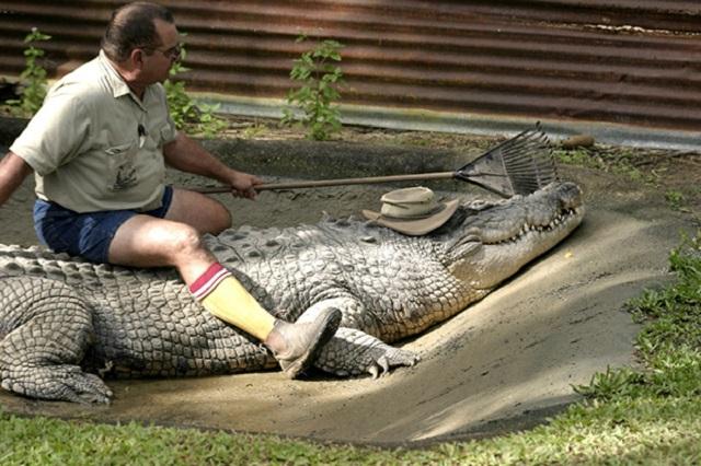 Плохие новости для тех кто хотел завести домашнего крокодила. Перечень животных, которых теперь нельзя содержать дома
