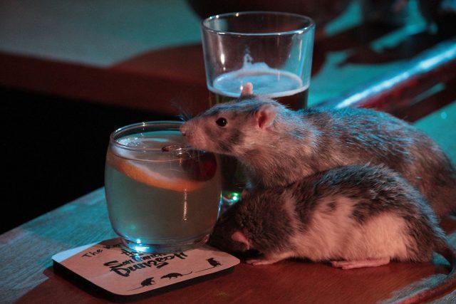 """В Сан-Франциско открылся """"крысиный"""" бар (фото + видео)"""
