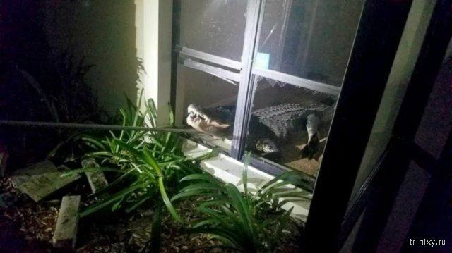 Жительница Техаса сфотографировала в местном водоеме крокодила с ножом в голове (5 фото)
