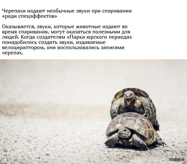 Необычные брачные ритуалы в мире животных (10 фото)