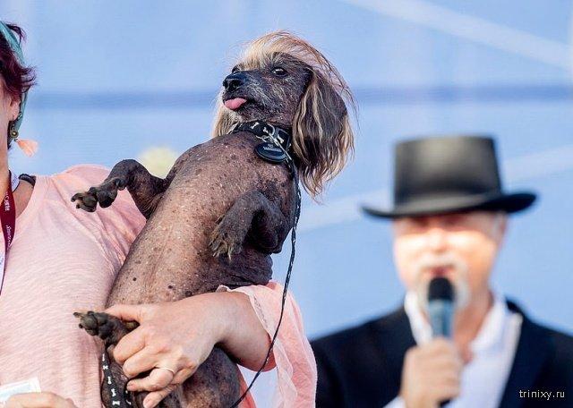 В США прошел конкурс «Самая уродливая собака» (13 фото)