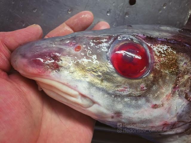 Чудища морских глубин (30 фото)