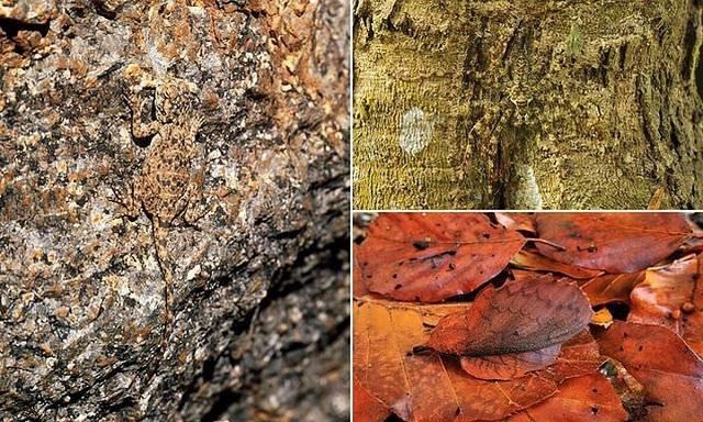 Самые скрытные животные на планете (9 фото)