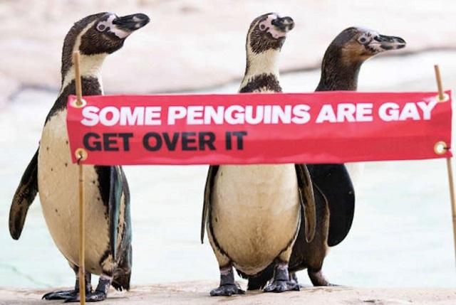 И такое бывает. В природе существуют пингвины-гомосексуалы