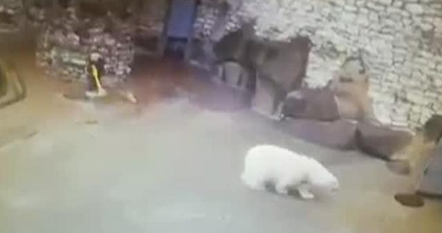 Женщина против белого медведя