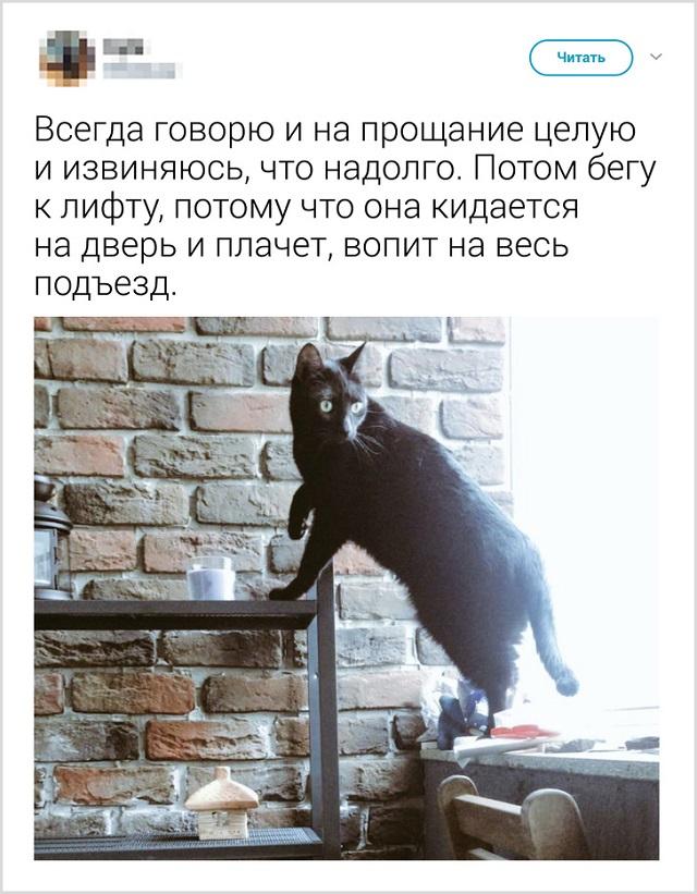 Пользователи рассказали, как они прощаются со своими котиками перед тем, как выйти из дома (22 скриншота)