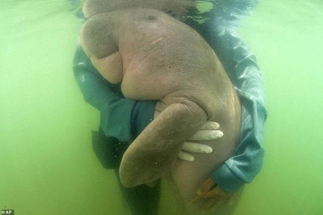 В Таиланде нашли самое милое животное, которое любит обниматься (5 фото + видео)