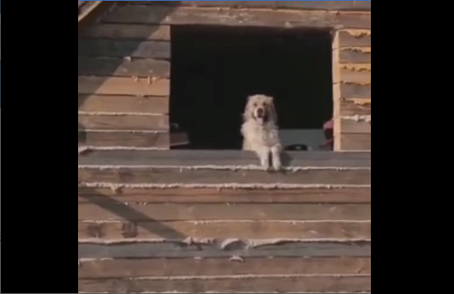 Команда питомника К-9 сняла видео о том, как происходило спасение животных в затопленном Тулуне