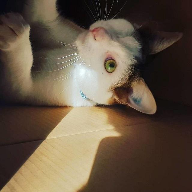 Четырехухий котенок покорил сердца работников приюта (10 фото)