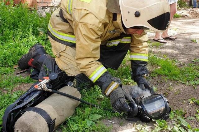 В Томске из пожара спасли животных (3 фото + видео)