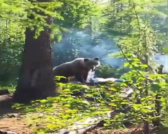 Медведь зашел на пикник